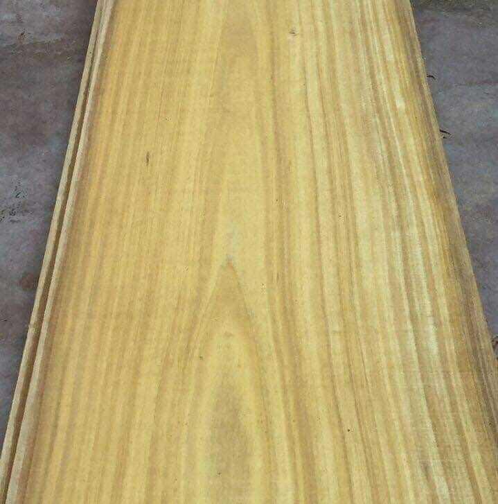 Đặc điểm gỗ vàng tâm